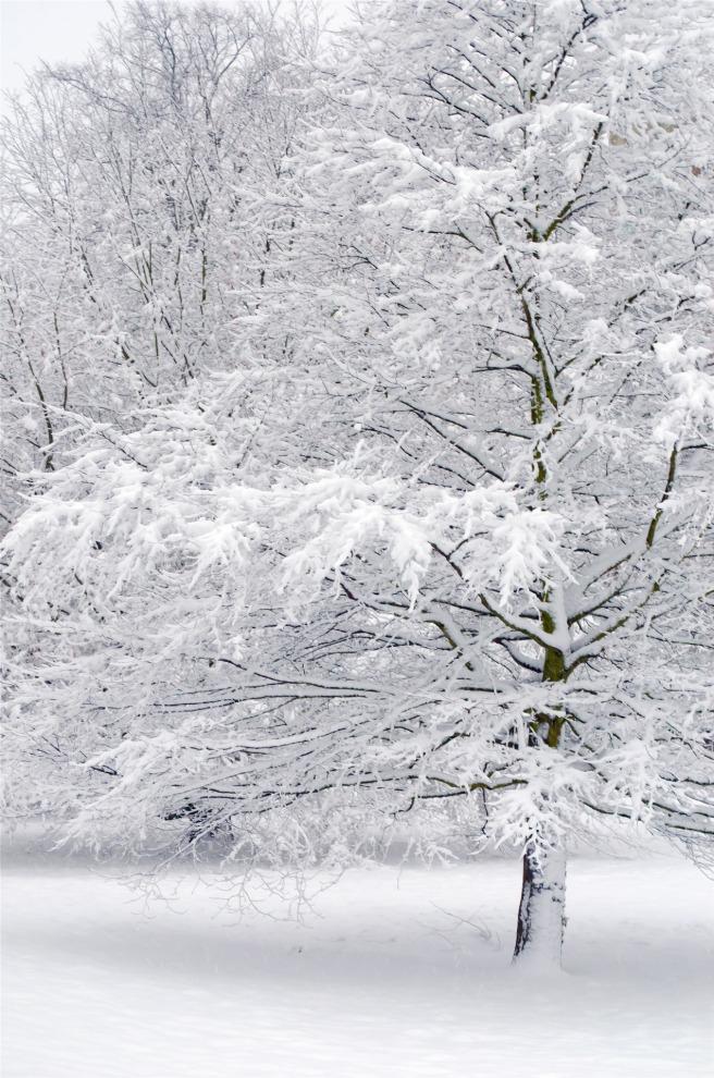 snowy-tree-1358767218xc3
